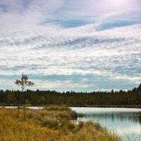 у лесного озера :: Олег Загорулько