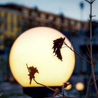 в теплом свете фонаря красный лист кленовый :: Андрей