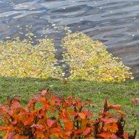прибило к берегу осеннюю  листву :: Елена