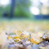 Осенний ковёр :: Valentina Zaytseva