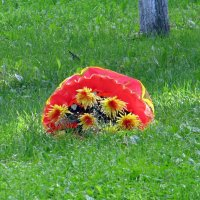 Цветы с зонтом на газоне :: Вера Щукина