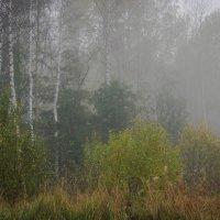 Осенний туман :: Рома Григорьев
