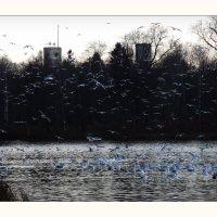 синие птицы :: sv.kaschuk