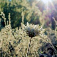 Осенний цветок... :: Юрий Стародубцев