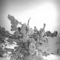 Заморожено! :: Irina Sergeeva