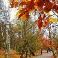 Аллея в парке.Ноябрь... :: Natali