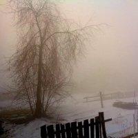 Туман на рассвете :: Милла Корн