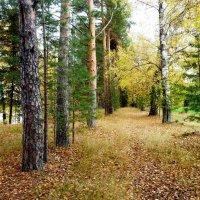 осень :: ВладиМер