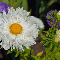 Цветы в нашем саду (этюд 22) :: Константин Жирнов
