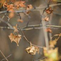 Осень :: Анастасия Митрофанова