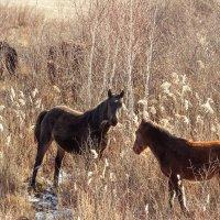 Кони, мои кони :: Андрей Пугачев