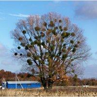 Украшенное дерево :) :: Валерия Комова