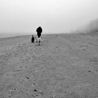 Туман... :: WADIM *****