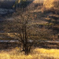 Осенний свет :: Ирина Остроухова