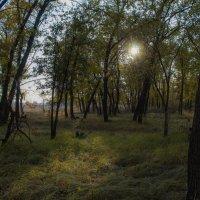 Дубовый лес :: Надежда