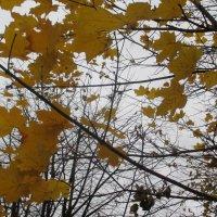 Последние листья ... :: Агриппина