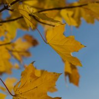 Осенние листья :: Олег Плотников