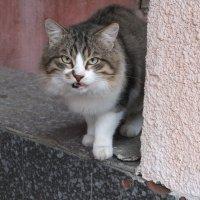 """""""Ненавижу фотосъёмку!"""" :: Наталья Тимошенко"""