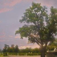 Прощальный  луч закатный.... :: Tatiana Markova