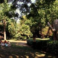 летом в парке :: Ольга