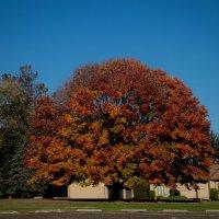 Отдельно стоящее дерево возле больницы св.Бенедикта (Пенсильвания,США) :: Leha F
