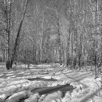 Ноябрьский лес :: Алексей Тырышкин