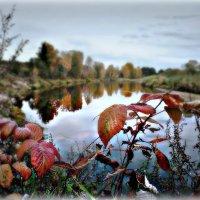 река Пушма, осень... :: ВладиМер