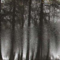Зачарованный лес :: galina bronnikova
