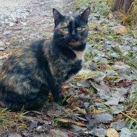 Осенний кот :: Наталья Нарсеева