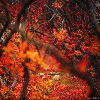 Осень – последняя, самая восхитительная улыбка года :) :: Алексей Латыш