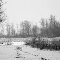 Зимняя осень :: Ульяна Северинова Фотограф