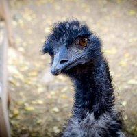 """Маленькая птичка страус говорит вам """"Привет"""" :: Елена Брыкова"""