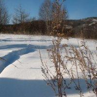 снег в январе :: Ксения