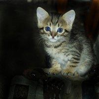 Вот я какая)) :: Илона Луценко