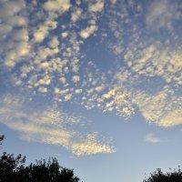 Осеннее небо :: Катерина Некрасова