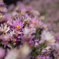 Осенние цветы :: Надежда