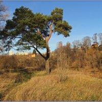 Осенний пейзаж с сосной. :: Роланд Дубровский