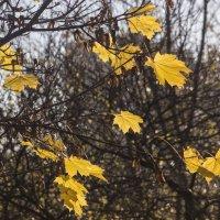 Ноябрьские листья :: Aнна Зарубина