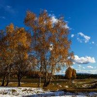 Осенний наряд берёз :: Анатолий Иргл