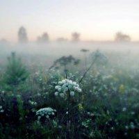 туман - туманище... :: ВладиМер