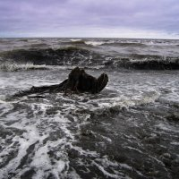о.Сахалин. Берег Охотского моря. :: cfysx