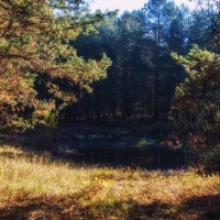 Первые заморозки в лесу :: Ирина Приходько