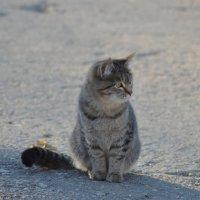 маленький охотник :: Светлана Рос