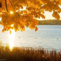 Солнечная осень :: Юлиана
