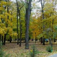 В осеннем парке...2 :: Тамара (st.tamara)