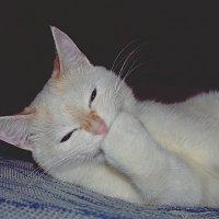 Кошачья улыбка :: Ксения Слободина