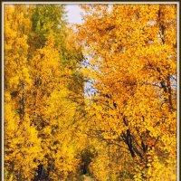 Всё золото осени :: Михаил Малец