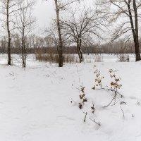 Ноябрь. Зима?(1) :: Евгений Герасименко
