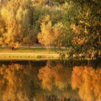 Золотая осень :: НАТАЛИ natali-t8