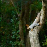 В лесу :: Геннадий Б